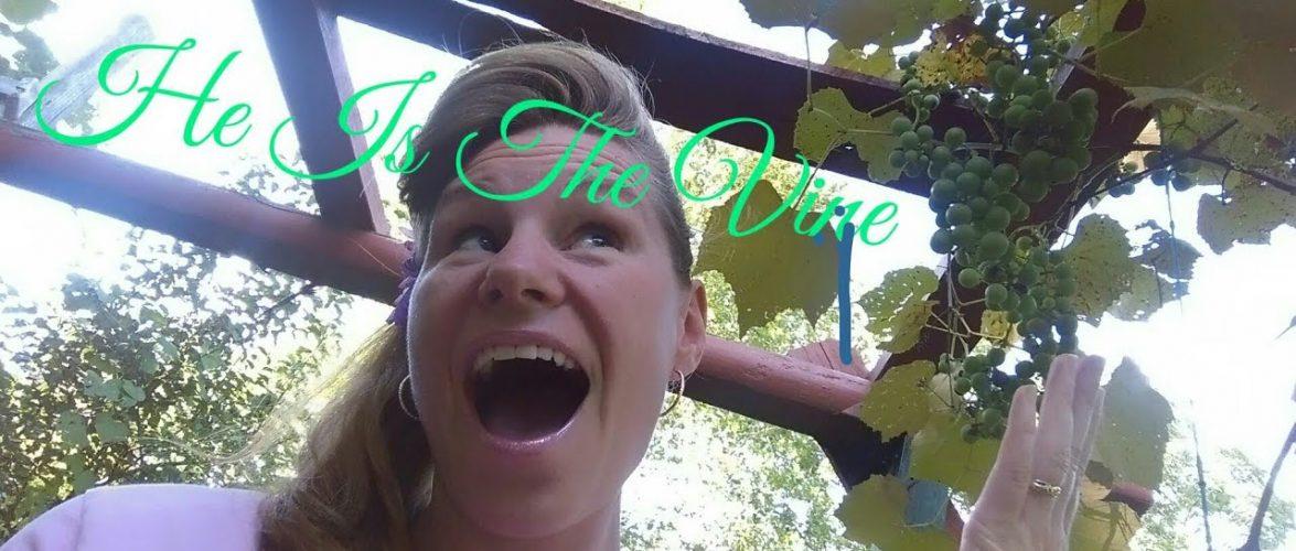 Bible Studies With Michelle: John 15 & 16… Jesus Is The Vine